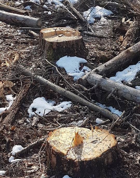 отсечени дървета