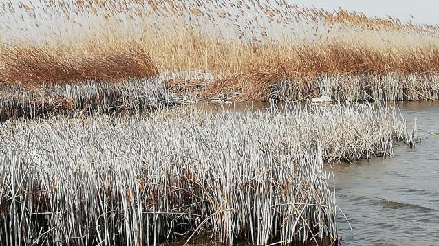Шабленско езеро
