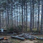 """Изсечените дървета в къмпинг """"Градина"""""""