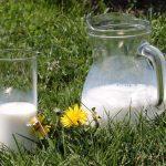каничка с мляко на тревата